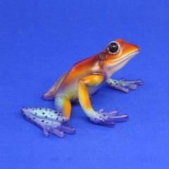 Baumsteigerfrosch Dendrobates granulatus