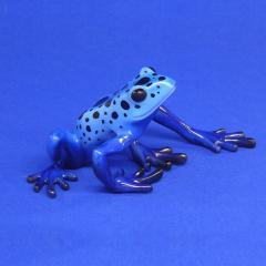 Blauer Baumsteiger Dendrobates azureus
