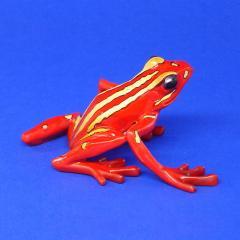 Dreifarbiger Baumsteiger Epipedobatus tricolor