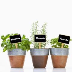 Memotafel Pflanzenstecker